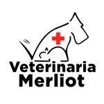veterinarias_ecopunto_control_plagas