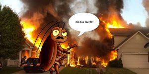 Cucarachas_Ecopunto_blog